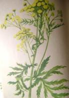 лекарственные травы сибири 001