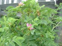 растения 001