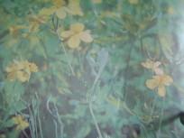 растения 005