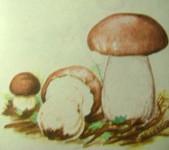 грибы 001
