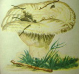 грибы 002