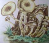 грибы 003