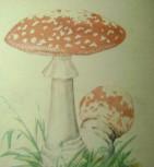 грибы 005