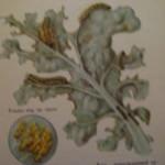 Запись 57.Защита растений.