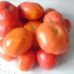 Запись 53. Все о томатах